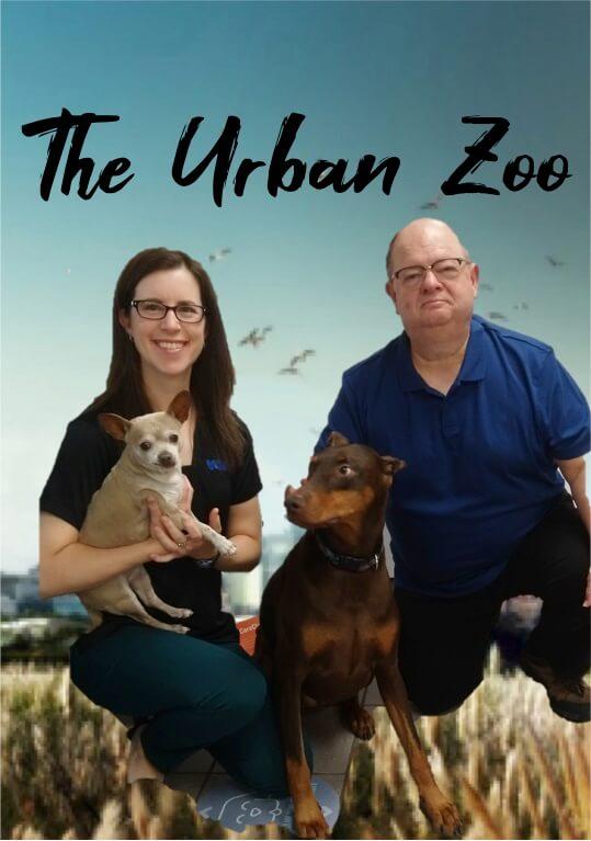 The Urban Zoo